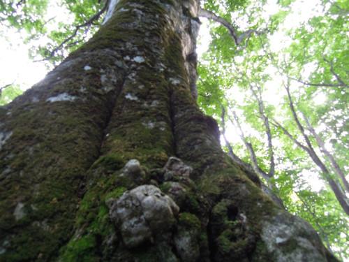2012登山日記[05]梵珠山
