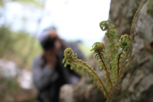 2012登山日記[02]高倉森